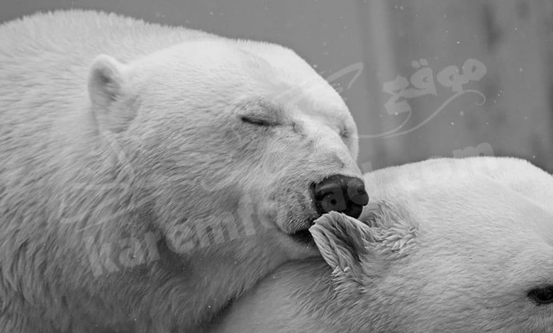 تفسير رؤية دب الباندا في المنام للمتزوجة