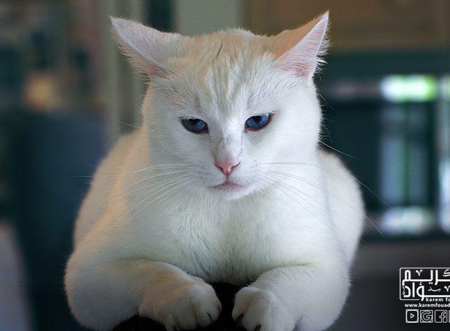 تفسير الحلم بالقطط ؟؟ ما معنى حلم القطط فى المنام ؟؟