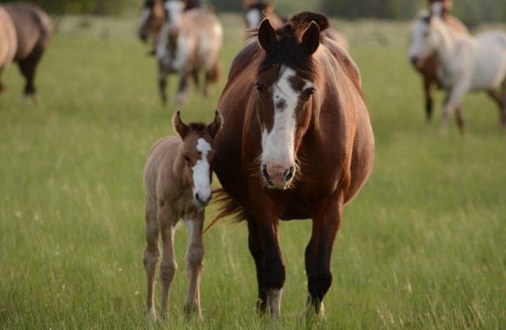 تفسير حلم الحصان في الحلم