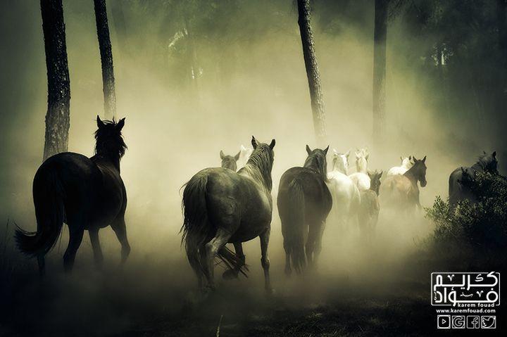 تفسير حلم الحصان في الحلم ؟؟