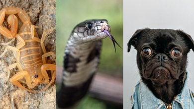 تفسير حلم العقرب والحيه والكلب