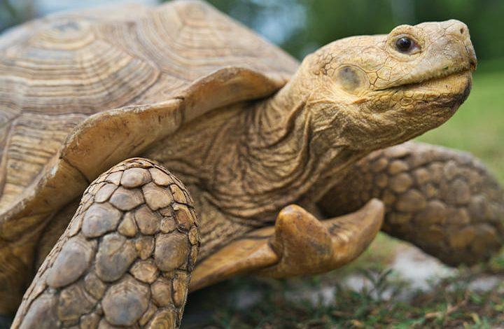 رمز السلاحف فى المنام