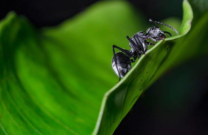 رمز النمل فى المنام