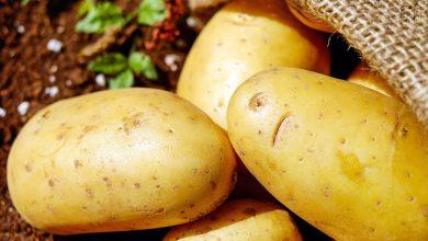 تفسير حلم اكل البطاطس