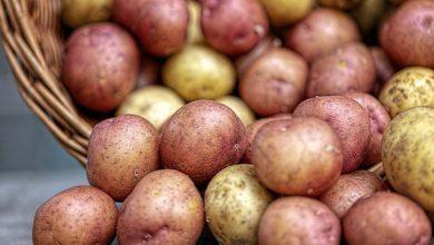 تفسير حلم البطاطس المطبوخة للعزباء