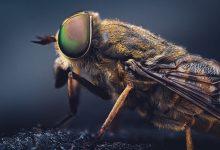 Photo of الحشرات الطائرة في المنام