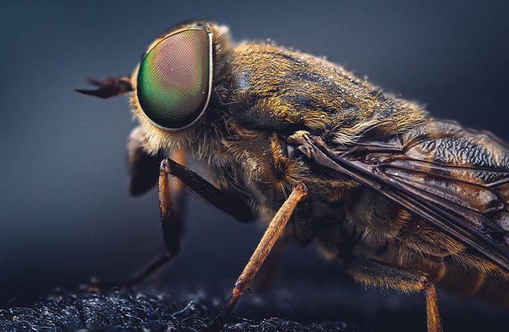 الحشرات الطائرة في المنام