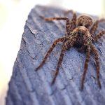 لدغة العنكبوت في المنام