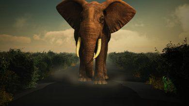Photo of اللعب مع الفيل في المنام