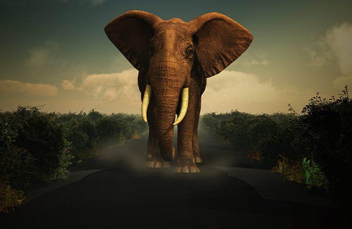 اللعب مع الفيل في المنام