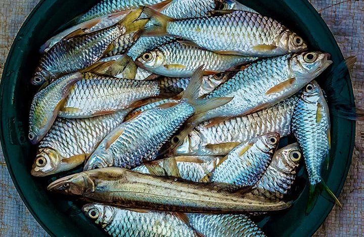 رؤية السمك النيء في المنام للعزباء