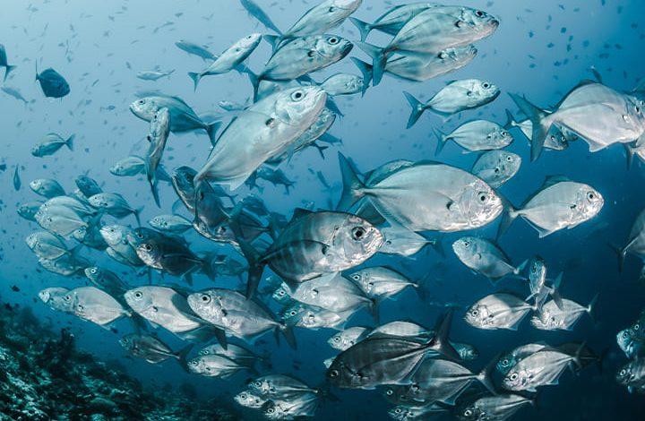 رؤية إعطاء السمك في المنام