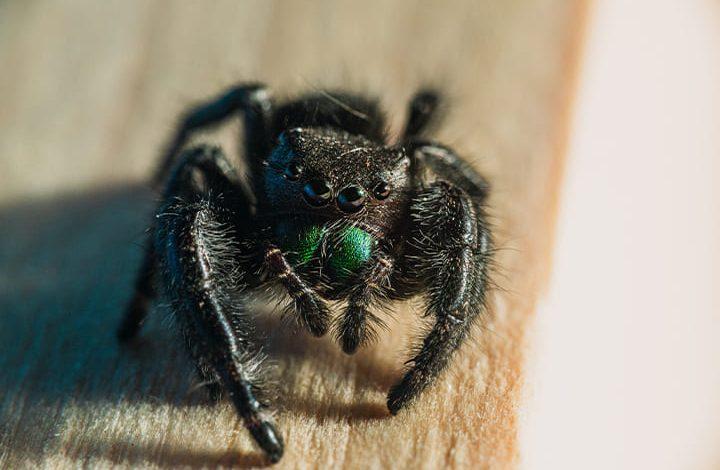 الهروب من العنكبوت في المنام