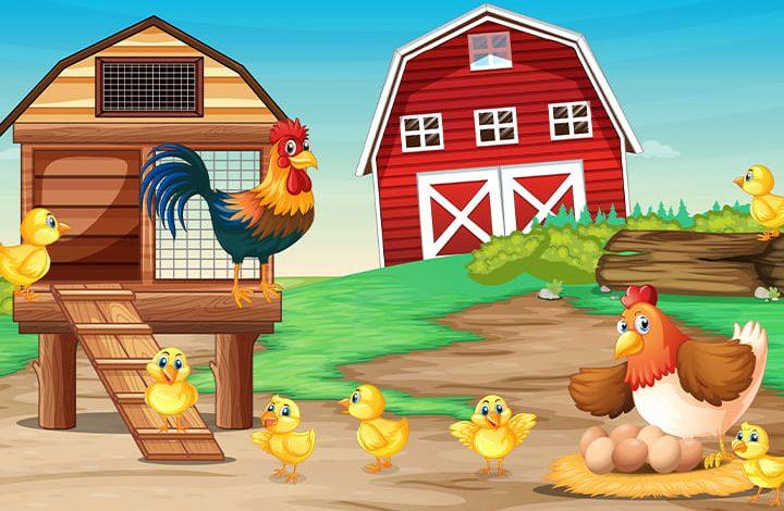 الدجاج في المنام للمتزوجة