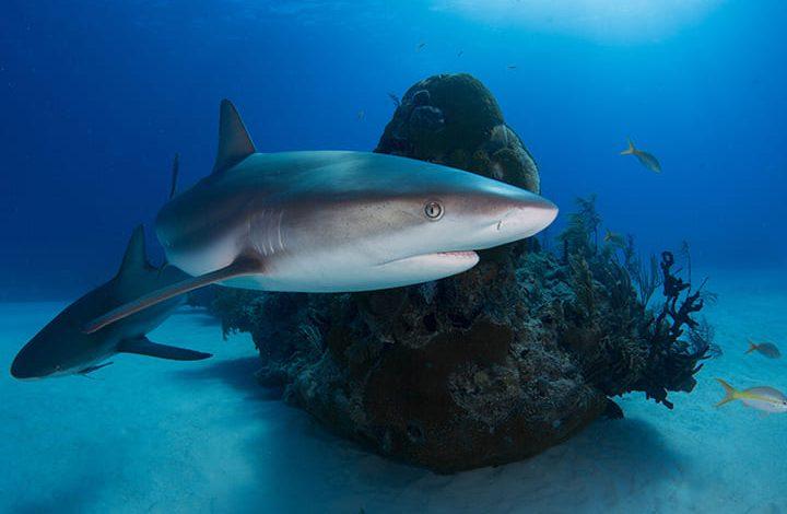 تفسير حلم سمك القرش يهاجمني للعزباء