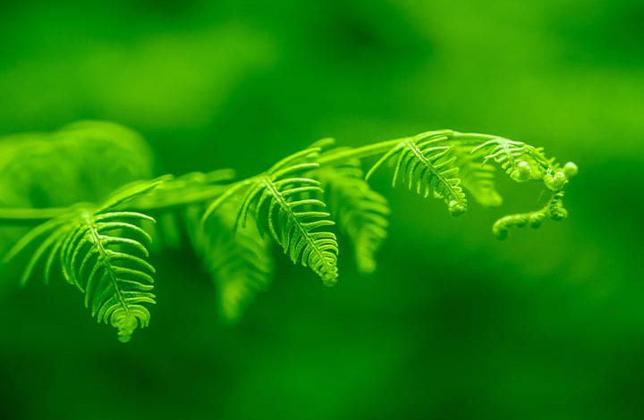 اللون الأخضر في المنام للمطلقة