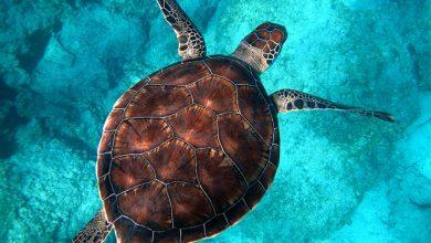 تفسير حلم السلحفاة في البحر
