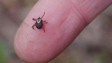 تفسير حلم حشرة البق في الفراش