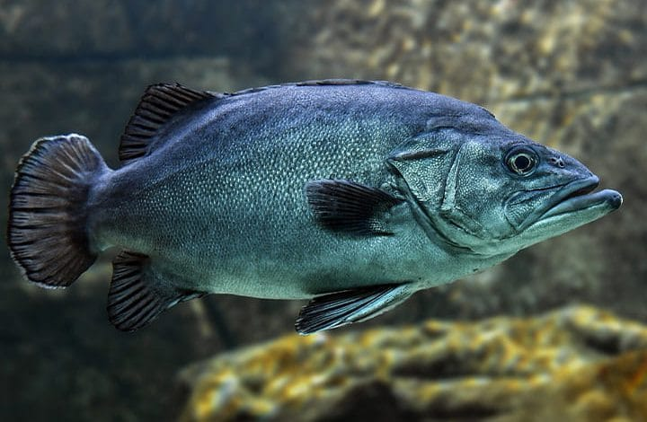 تفسير حلم سمك مشوي