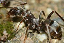 تفسير رؤية النمل في المنام على الفراش