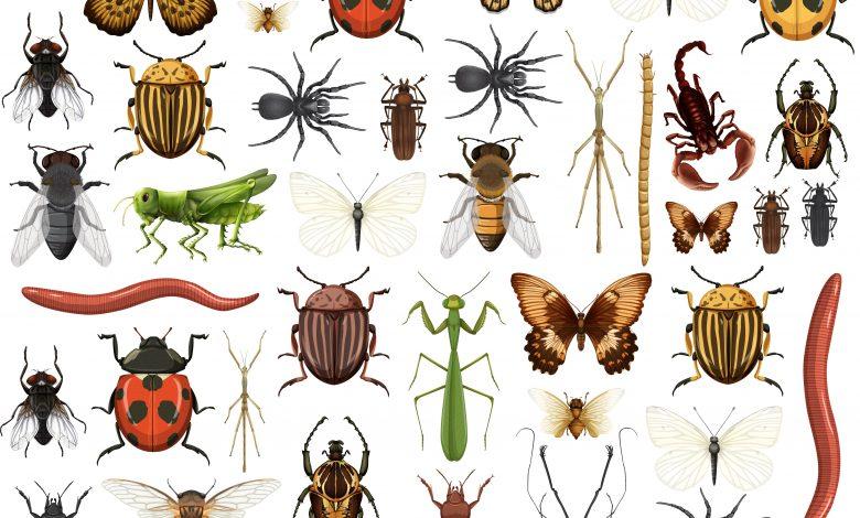 السبب الطاقي وراء ظهور الحشرات