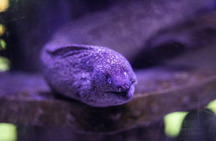 تفسير حلم سمك الثعبان للعزباء