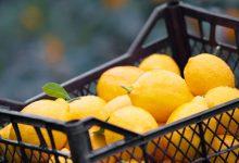 تفسير اللون الليموني في المنام