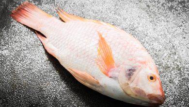 تفسير حلم صيد السمك البلطي باليد للحامل