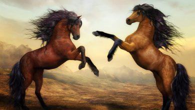 تفسير مطاردة الحصان في الحلم