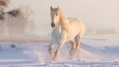 ألوان الحصان في المنام