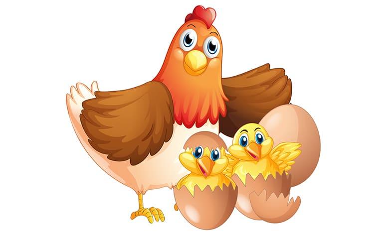 رؤية الدجاج يبيض في المنام