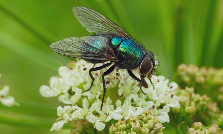 تفسير حلم حشرات على جسمي