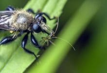 تفسير حلم لسعة حشرة غريبة
