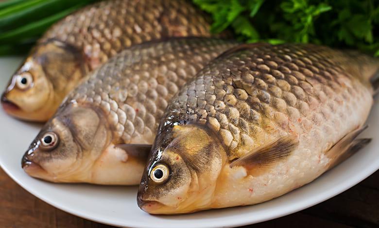 رؤية السمك في المنام لابن سيرين