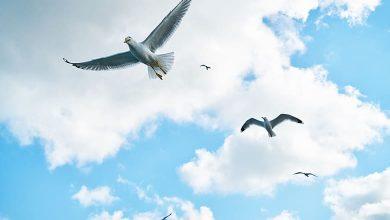 تفسير حلم الطيور في السماء للمتزوجه