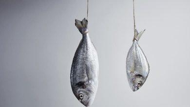 تفسير حلم صيد السمك الملون