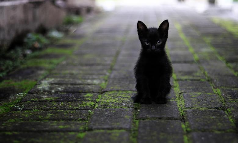 تفسير القط الأسود في المنام للمتزوجه