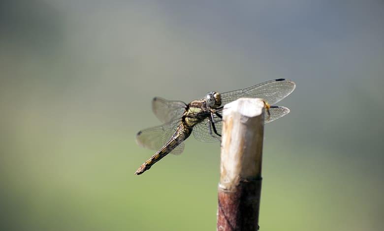 تفسير الحشرات الغريبة في الحلم للمتزوجه