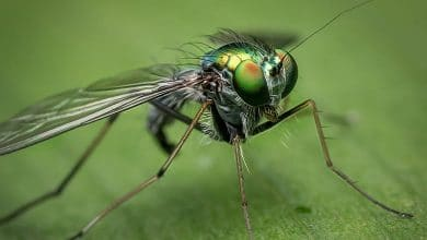 حلم حشرة الذبابه في المنام