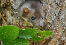 تفسير حلم الفئران للمتزوجه