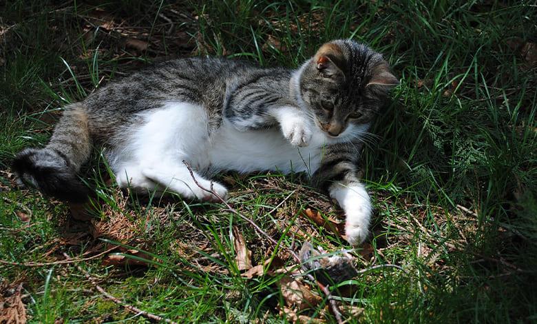 تفسير حلم القطط والفئران