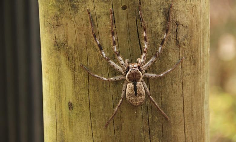 رؤية عناكب صغيرة في المنام