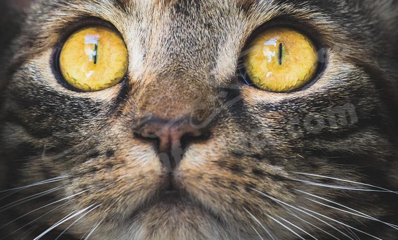 القطط والسحر في المنام