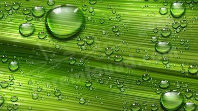 الماء الأخضر في المنام